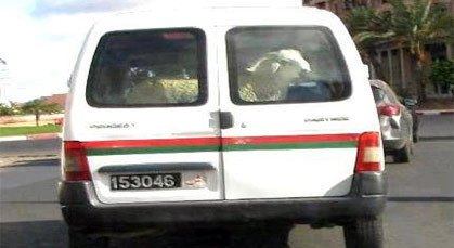 ما الذي يفعله خروف العيد داخل سيارة الشرطة؟؟.. لكم التعليق