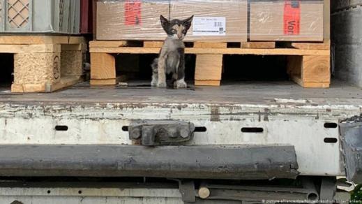 قطة تعبر البحر المتوسط وتنجح في الهجرة سرا إلى ألمانيا