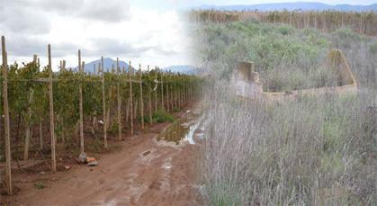 """رئيس جماعة بني وكيل يحول مقبرة """"لَبْصَارَة"""" الى ضيعة لجني وإنتاج العنب"""