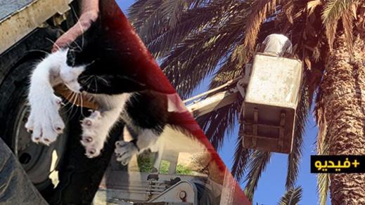 شاهدوا: في حادث غريب.. الوقاية المدينة بالناظور تنقذ قطة علقت في أعلى نخلة