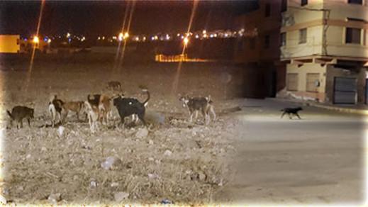 قطعان الكلاب الضالة تغزو جماعة سلوان والسلطات تكتفي بالمشاهدة
