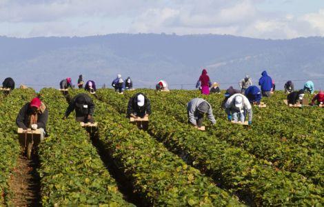 في مجال البناء والفلاحة.. مغاربة مطلوبون للعمل في إيطاليا وإسبانيا والبرتغال