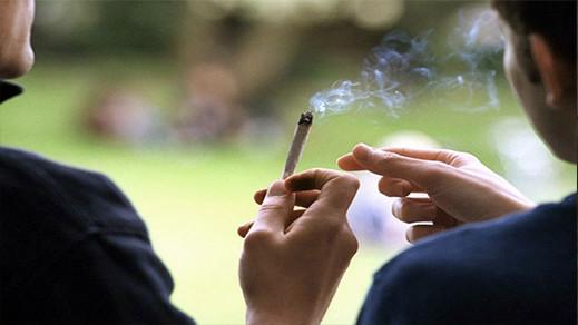 ماذا وراء سحب الأمم المتحدة القنب من قائمة المخدرات الخطيرة؟