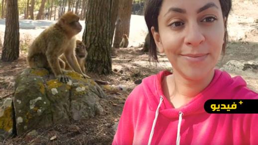 """شاهدوا.. جولة وسط القرَدة والأشجار في غابة """"كوروكو"""" وزيارة لقلعتها التاريخية"""