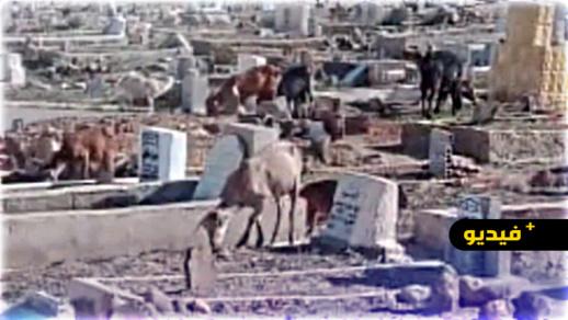مقبرة الرحمة ببني انصار تتحول إلى مطرح للنفايات ومرعى للقطعان ومجلس المدينة يلعب دور المتفرج