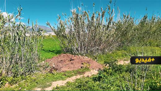 شاهدوا.. هذا هو المكان الي عثر فيه مواطنون على قبر سري لجثة امرأة مدفونة بأخندوق