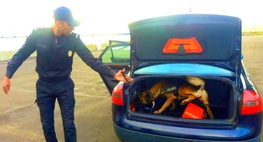 اعتقال عضو بشبكة للاتجار الدولي في المخدرات قادما من أوروبا بميناء طنجة