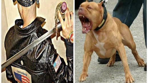 شرطي يستعمل السلاح الوظيفي لتوقيف شخص حرض كلبا شرسا على عناصر الأمن