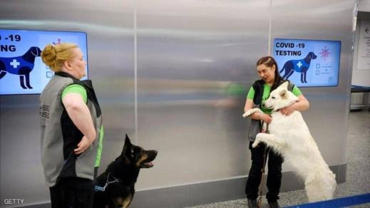 الكلاب تساهم في اكتشاف المصابين بكورونا
