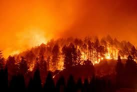 حريق يأتي على مئات الأشجار ضواحي الناظور.. والوقاية المدنية تستنفر عناصرها لإخماده