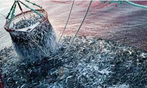 وسائل محظورة في صيد الأسماك تهدد الثروة السمكية بسواحل الناظور