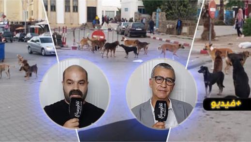 جمعوي ناظوري يقترح حلولا للقضاء على الكلاب الضالة ويناشد عامل الإقليم بالتدخل