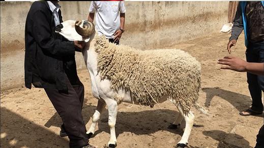 الأحد فاتح ذي الحجة وعيد الأضحى يوم 20 يوليوز بعدد من الدول العربية