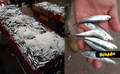 بحارة بميناء بني انصار يدقون ناقوس الخطر.. الثروة السمكية مهددة أمام جشع كبار الصيادين