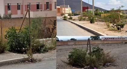 كارثة بيئية في حق 21 شجرة بشارع الانبعاث بمدخل مدينة زايو من مجهول