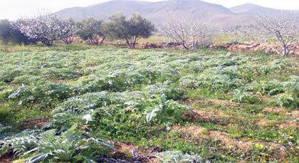 الحكومة تشرع قريبا في مصادرة أراضي لسكان مدن مغربية من بينها مدينة الناظور