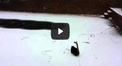 بالفيديو: قطة تطارد الثلج ظناً أنه فأر