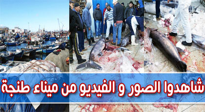 أجواء الدلالة بميناء طنجة بين ندرة الأسماك و إرتفاع أثمانها