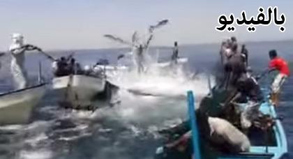 بالفيديو.. الأسماك تلقي بنفسها في شباك الصيادين الفلسطينيين فور عودتهم إلى العمل بعد الانتصار