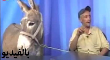 لأول مرة في تاريخ الإعلام.. قناة تستضيف حمارا في برنامج حواري