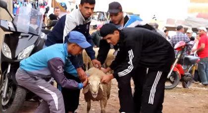 شاهدوا فيلم كوميدي قصير بالريفية حول سوق العيد