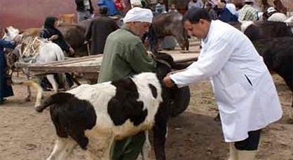 الحمى القلاعية تدق أبواب المغرب من الجهة الشرقية