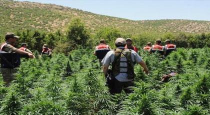 بعد تشديد الخناق على مهربي المخدرات.. الشرطة الإسبانية تعتقل مغربيا يستنبت الماريجوانا بإسبانيا