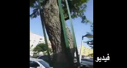 """بالفيديو: جبر """"شجرة"""" مكسورة وسط مليلية يثير سخرية وتهكّم الناظوريين على الفايس"""
