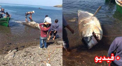 بحارة من تمسمان يصطادون حوتا ضخما يزن حوالي 300 كلغ بساحل اقليم الدريوش