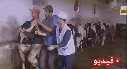 بعد أن عجزت الجزائر عن  السيطرة على  الحمى القلاعية.. الجهة الشرقية تستنفر مصالحها لحماية قطيع الماشية بالمنطقة