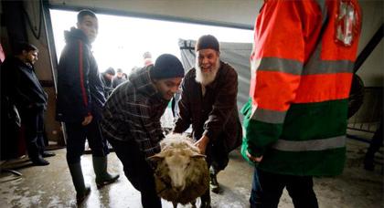مسلمو بلجيكا يطالبون بالتشاور قبل حظر الذبح بلا تخدير
