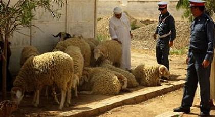 الدرك الملكي يفكك عصابة إجرامية متخصصة في سرقة المواشي بإقليم الدريوش