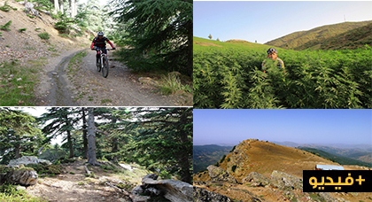 دراج يوثق رحلته الى جبل تدغين.. مناظر طبيعية خلابة ، غابة أرز ساحرة ومزارع الكيف الواسعة