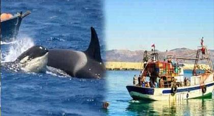الدلفين الأسود يعود لشن هجماته على شباك الصيادين بمدينة الحسيمة