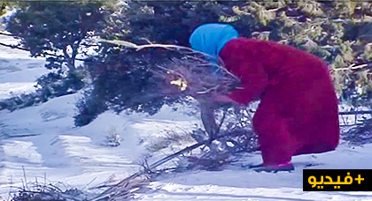شاهدوا.. فاطمة إمرأة ريفية تقطع كيلومترات يوميا لجلب حطب التدفئة