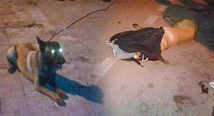 كلبة تقتل طفلة في الرابع من عمرها بعدما حاولت اللعب مع جروها