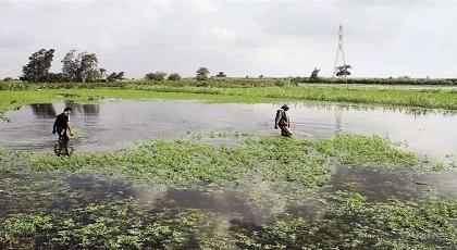 """المساحات المخصصة لزراعة """"الكيف"""" بمنطقة الريف تتقلص لهذا السبب"""
