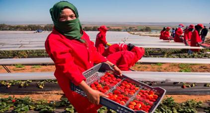 بينهن ريفيات.. تساقطات شهر أبريل تهدد العاملات في حقول الفراولة بإسبانيا