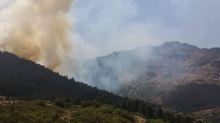 إندلاع حريق مهول بغابة الأرز باقليم الحسيمة والسلطات تعلن حالة إستنفار لمحاصرته