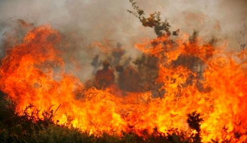 جهة الحسيمة ثانيا.. 78 حريقا التهم 111 هكتارا من الغابات منذ بداية السنة الجارية