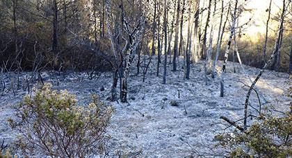 الحرائق تأتي على أزيد من 12 هكتار من المساحات الغابوية في مدن الحسيمة وكرسيف وتازة