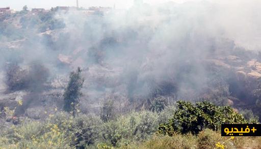 بالفيديو.. حريق مهول يلتهم مساحة واسعة من الأحراش والأشجار المثمرة بجماعة بودينار