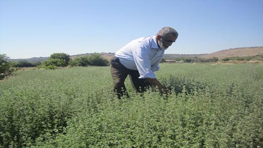 """الاستنزاف الكبير لنبتة """"الزعتر""""  يحرك  منتجي العسل بإقليم الحسيمة"""
