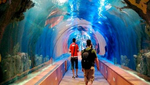 """مليار و 100 مليون سنتيم لإحداث أحواض """"متحف"""" للأسماك في بحر الحسيمة"""