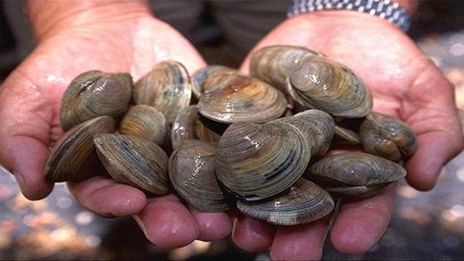 بسبب المواد البيولوجية السامة.. وزارة الصيد البحري تحظر جمع وتسويق الصدفيات بالناظور