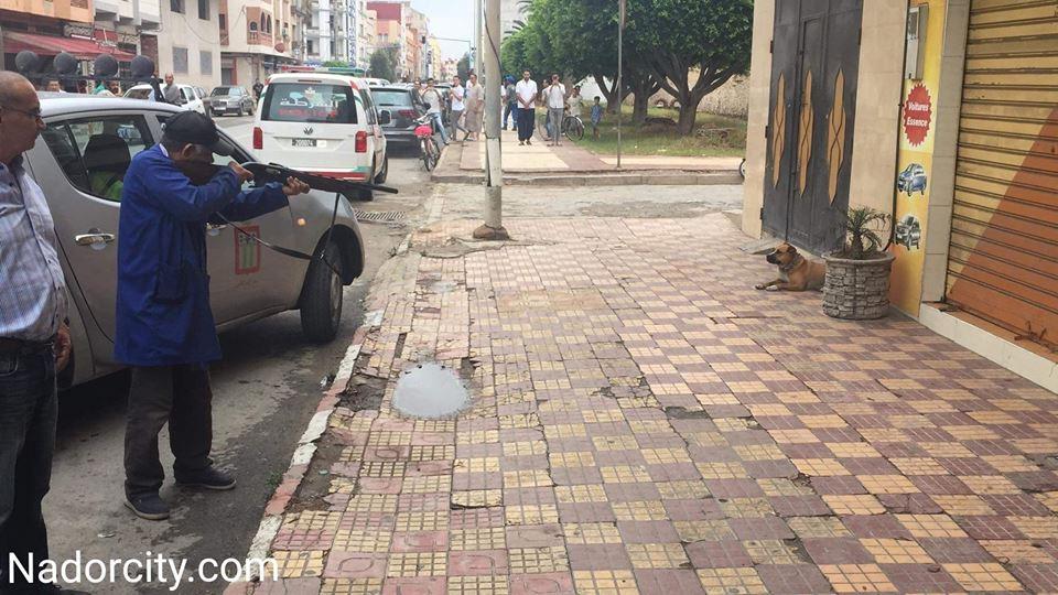 """استنفار امني بالناظور لإعدام كلب من نوع """"بيتبول"""" رميا بالرصاص"""