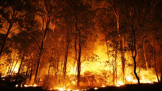 بالصور.. اندلاع حرق بغابة كوروكو والرياح تزيد من اتساع رقعة ألسنة النيران