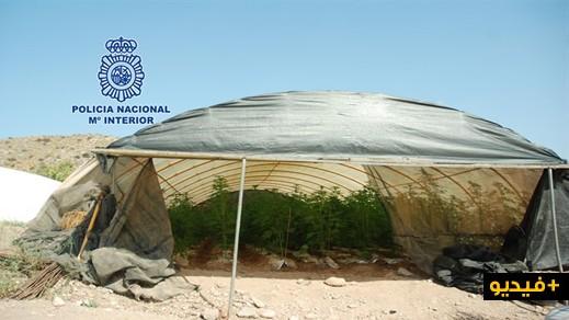توقيف إسباني حول قطعة أرضية الى مزرعة للحشيش باقليم مورسيا