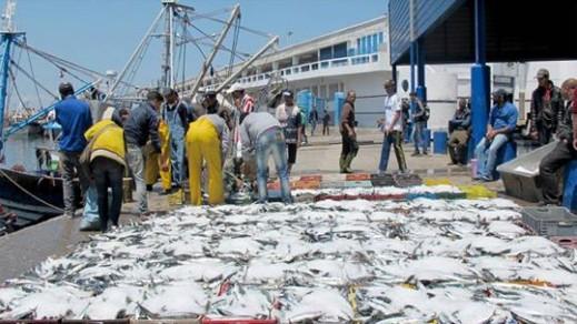 استطلاع: انخفاض طفيف في مفرغات الصيد البحري بميناء الحسيمة مقارنة بالسنة الماضية