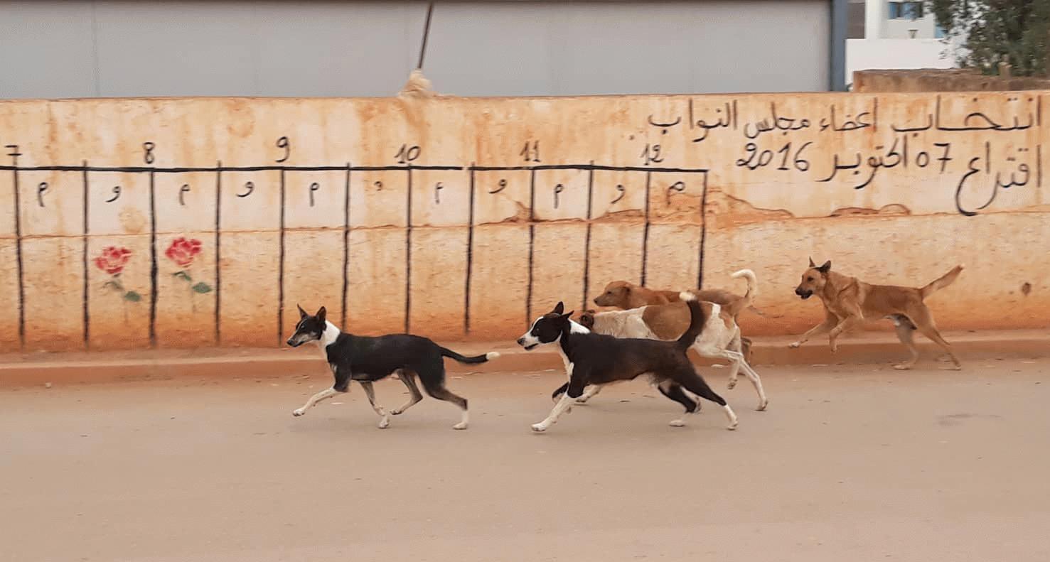 وزارة الداخلية تعتزم تعقيم الكلاب الضالة للحد من تكاثرها